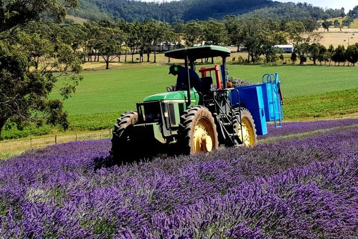 Essential Oils of Tasmania
